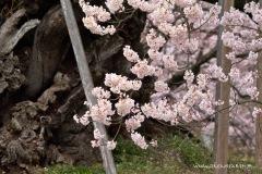 2010 -- 春