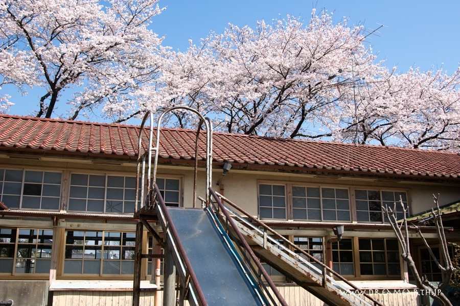 下里分校の桜