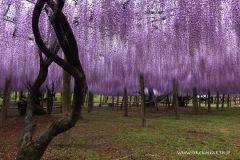 2015 -- 春