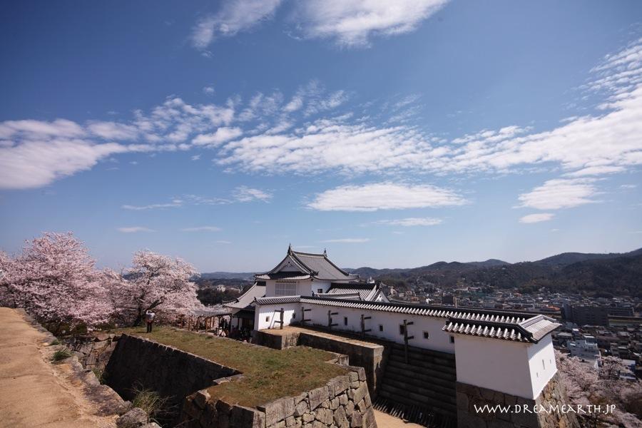 鶴山公園(津山城址)の桜