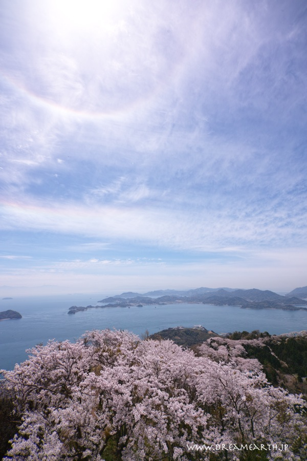 日暈と環水平アーク 積善山山頂の桜