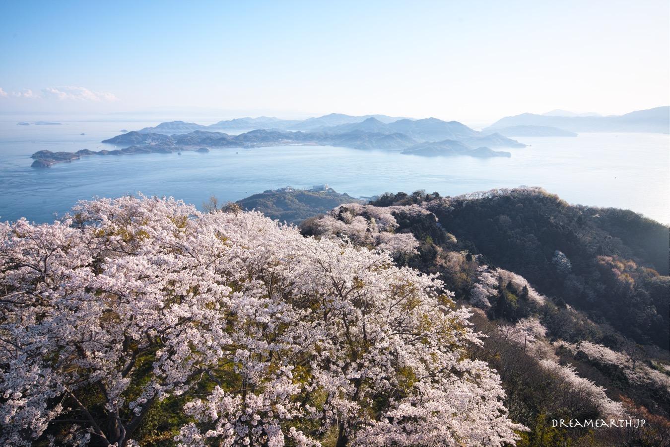 岩城島・積善山の桜