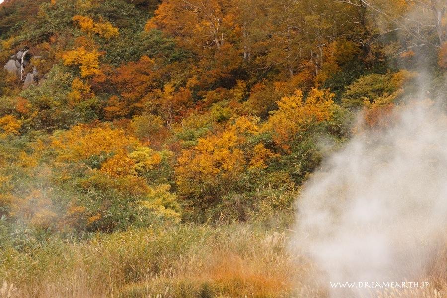 蒸ノ湯温泉の黄葉