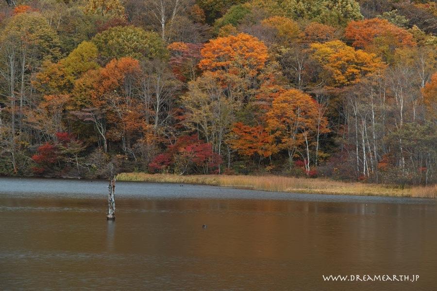 戸隠・鏡池の紅葉