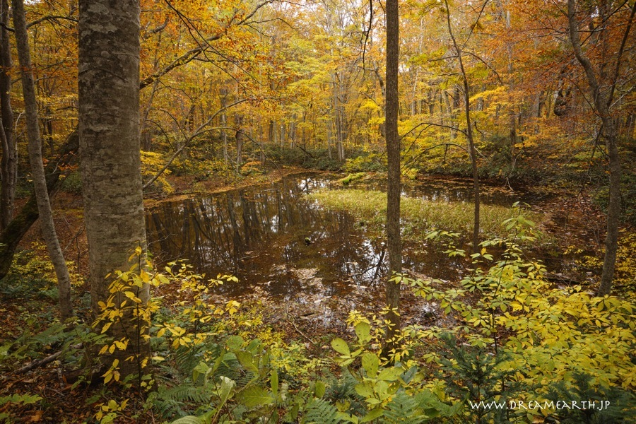 蔦温泉・鏡沼の紅葉