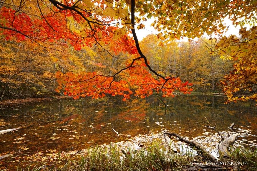 蔦温泉・月沼の紅葉