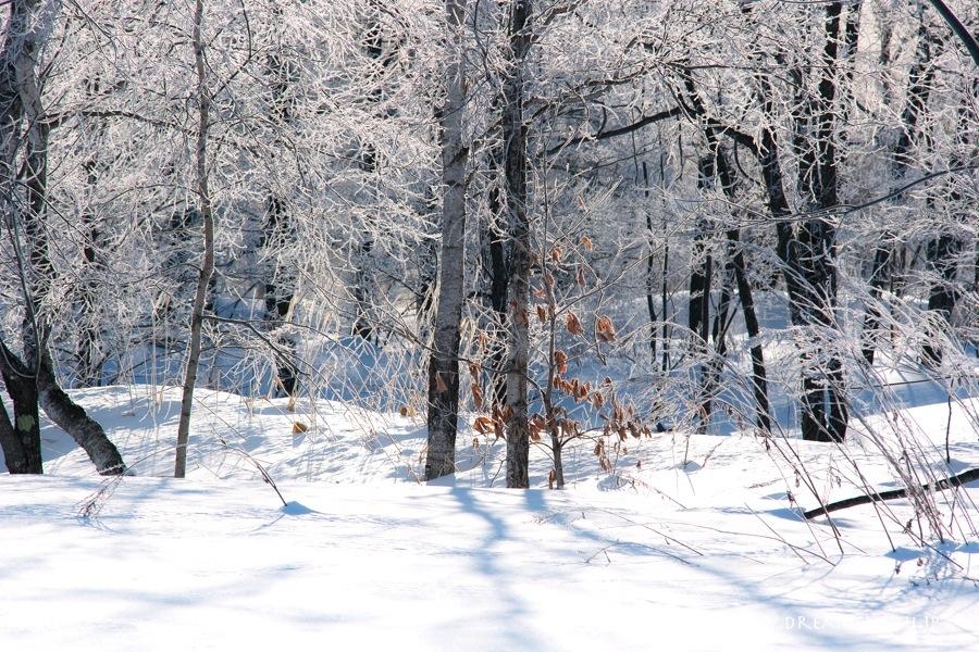 更別村 猿別川の霧氷