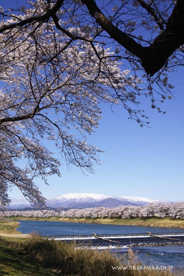 と韮神堰より白石川堤一目千本桜