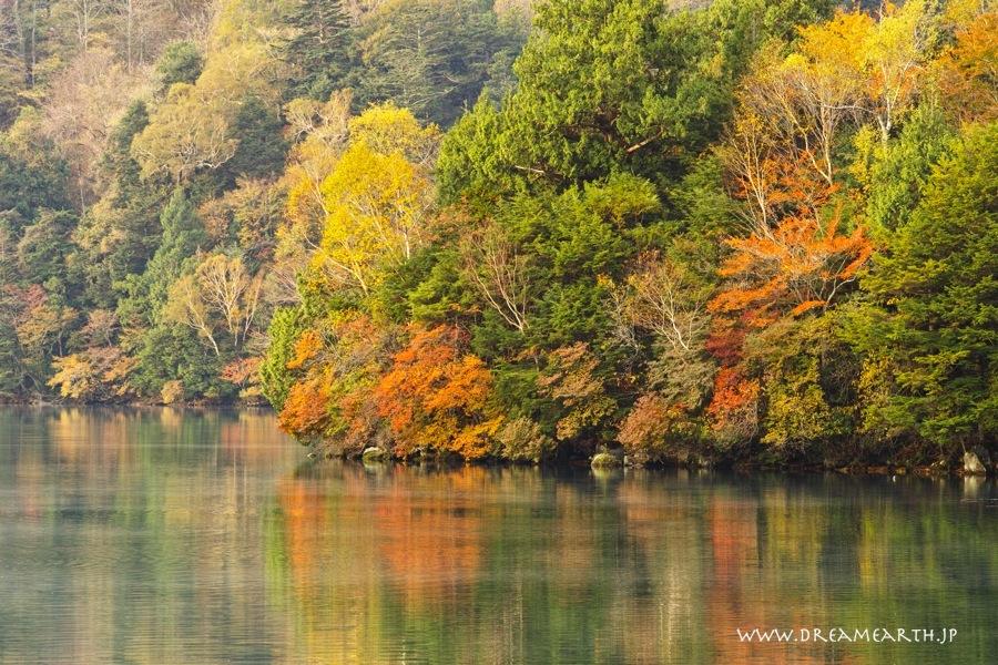 湯ノ湖の黄葉