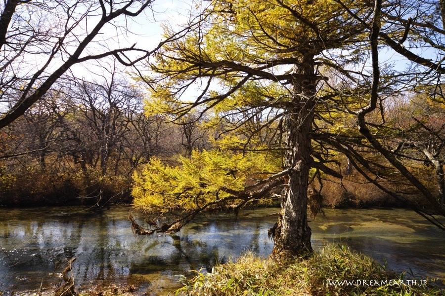 小田代ヶ原の黄葉