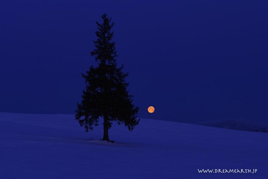 有明の月とクリスマスツリーの木