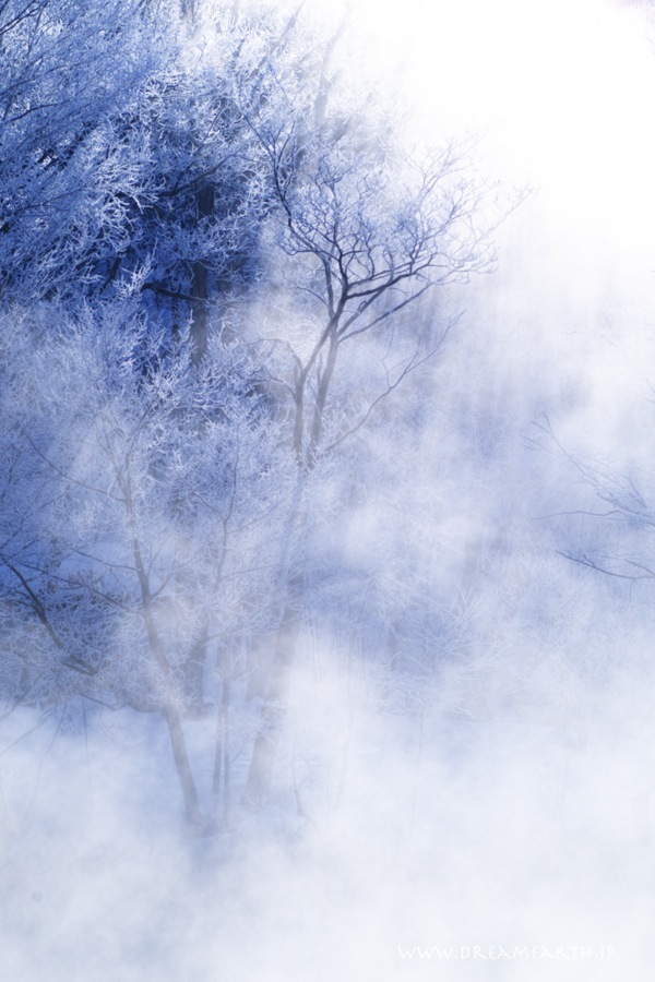 鳥沼公園の霧氷
