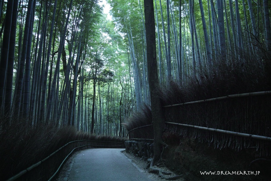 京都・嵯峨野の竹林