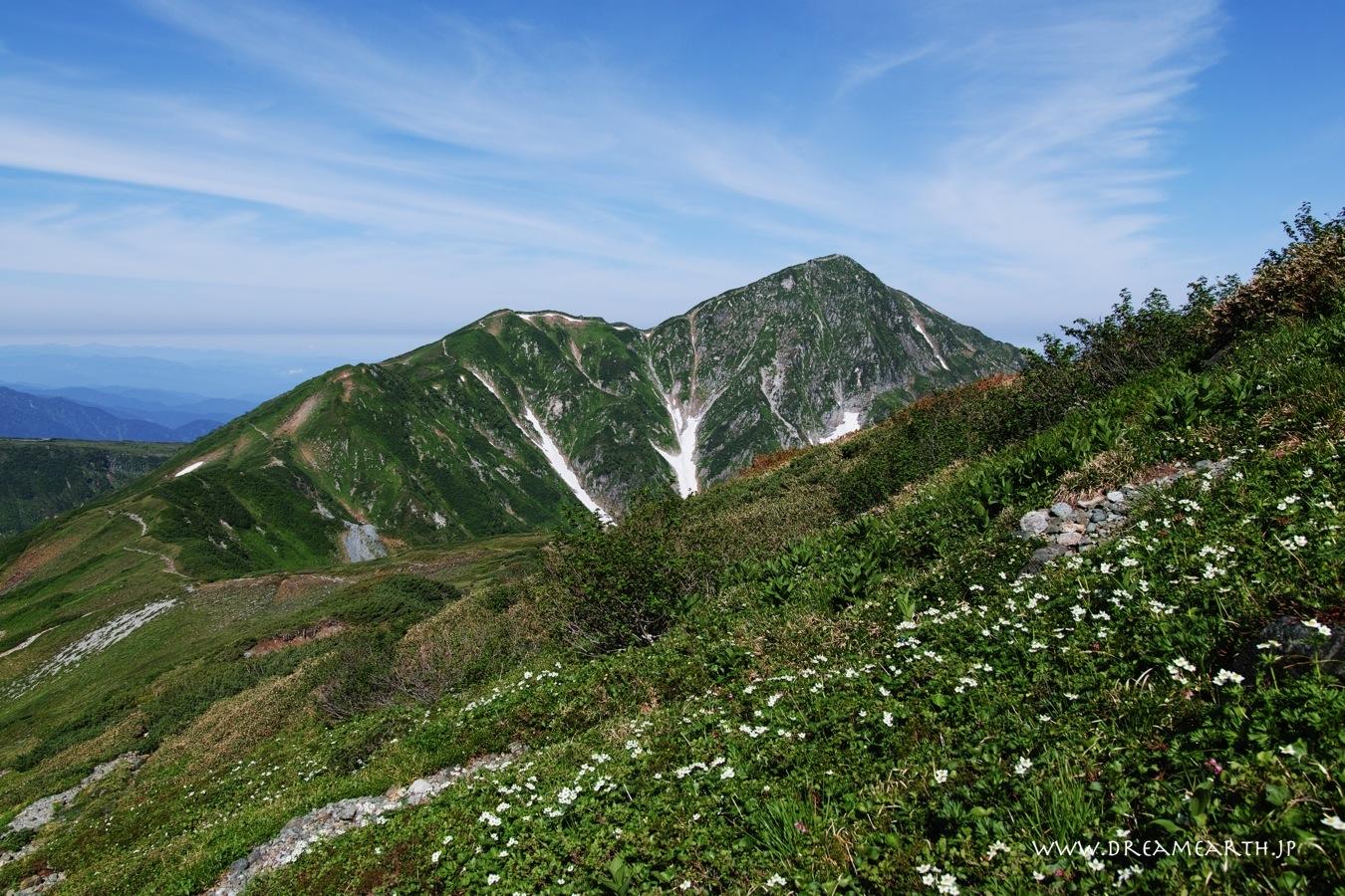 お花畑と奥大日岳