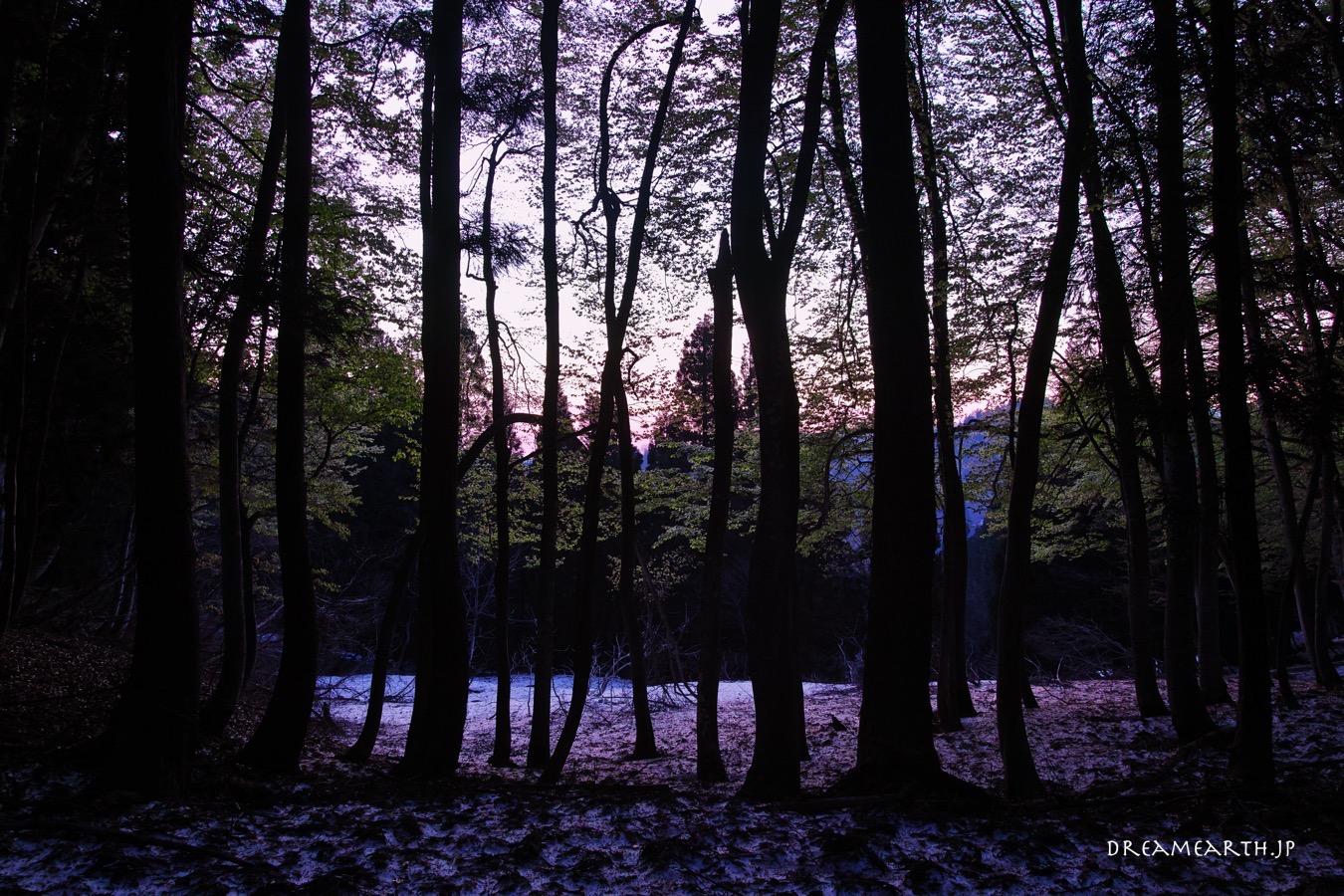 残雪と新緑の美人林