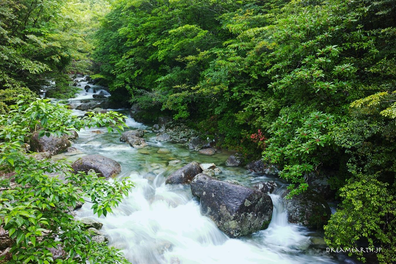 屋久島 荒川登山口