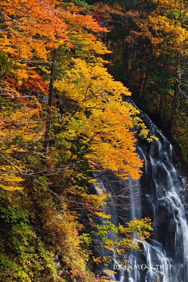 立又渓谷 一の滝の紅葉