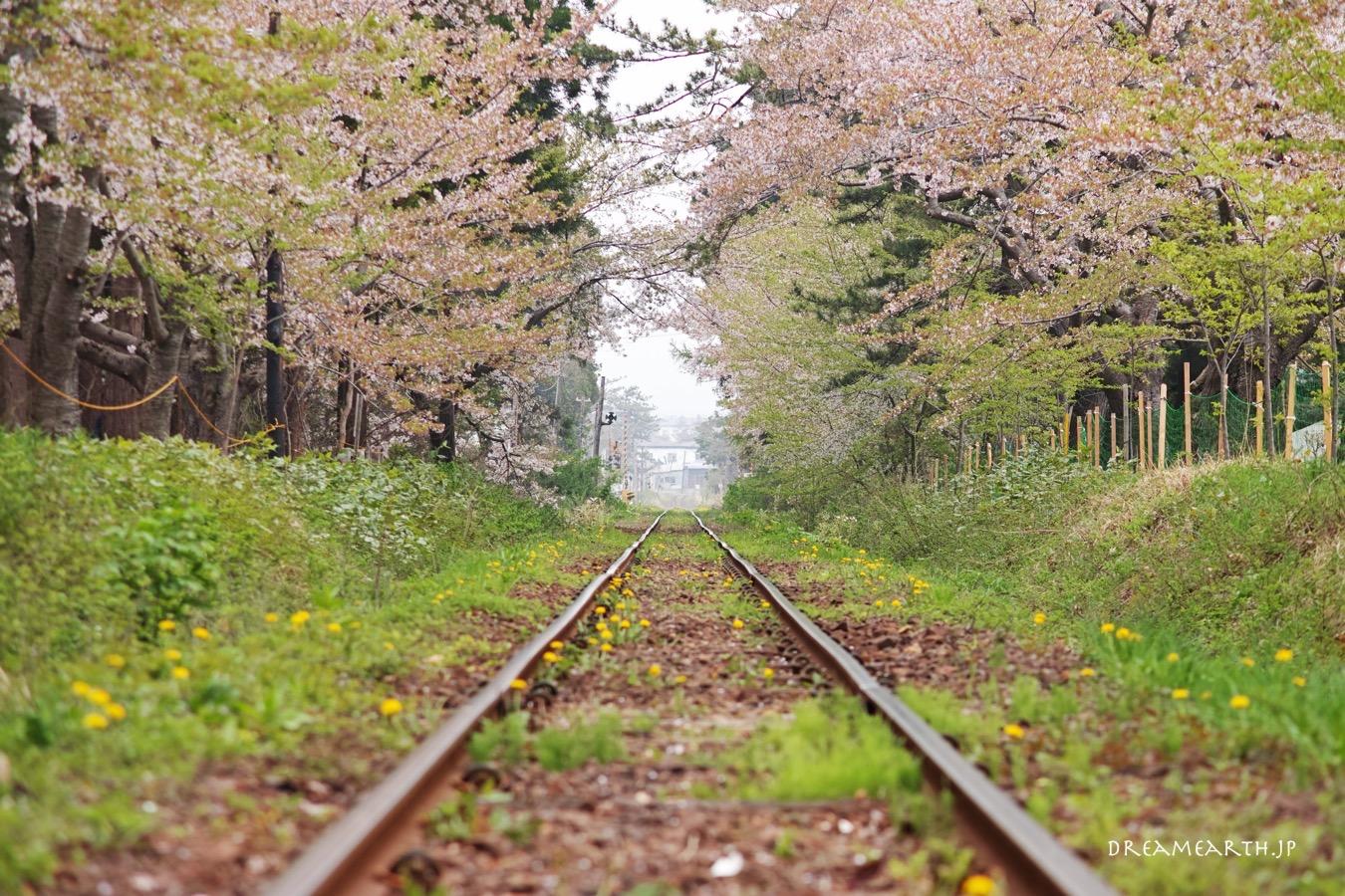 芦野公園の桜