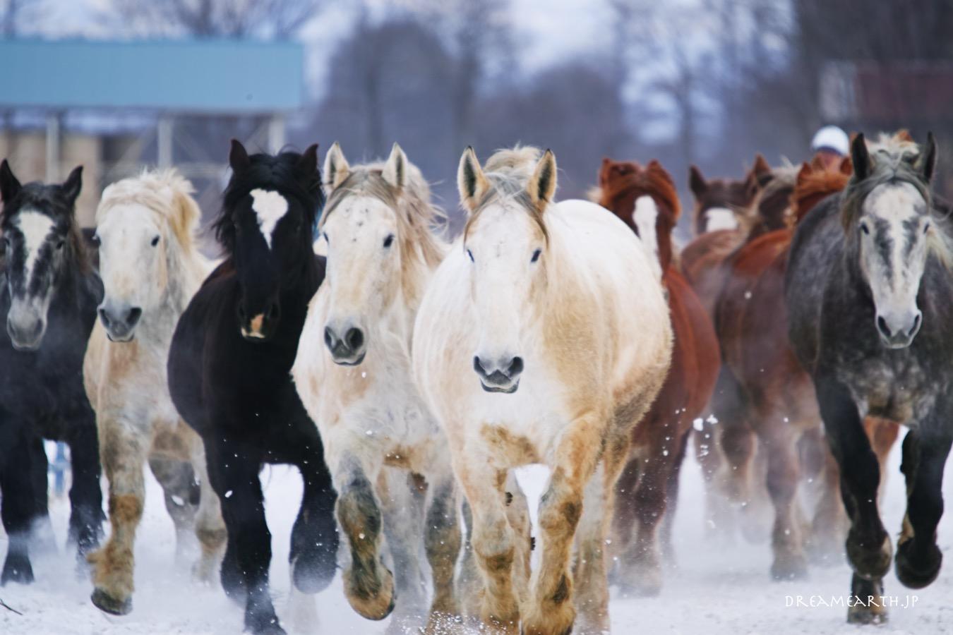 十勝牧場の馬追い運動