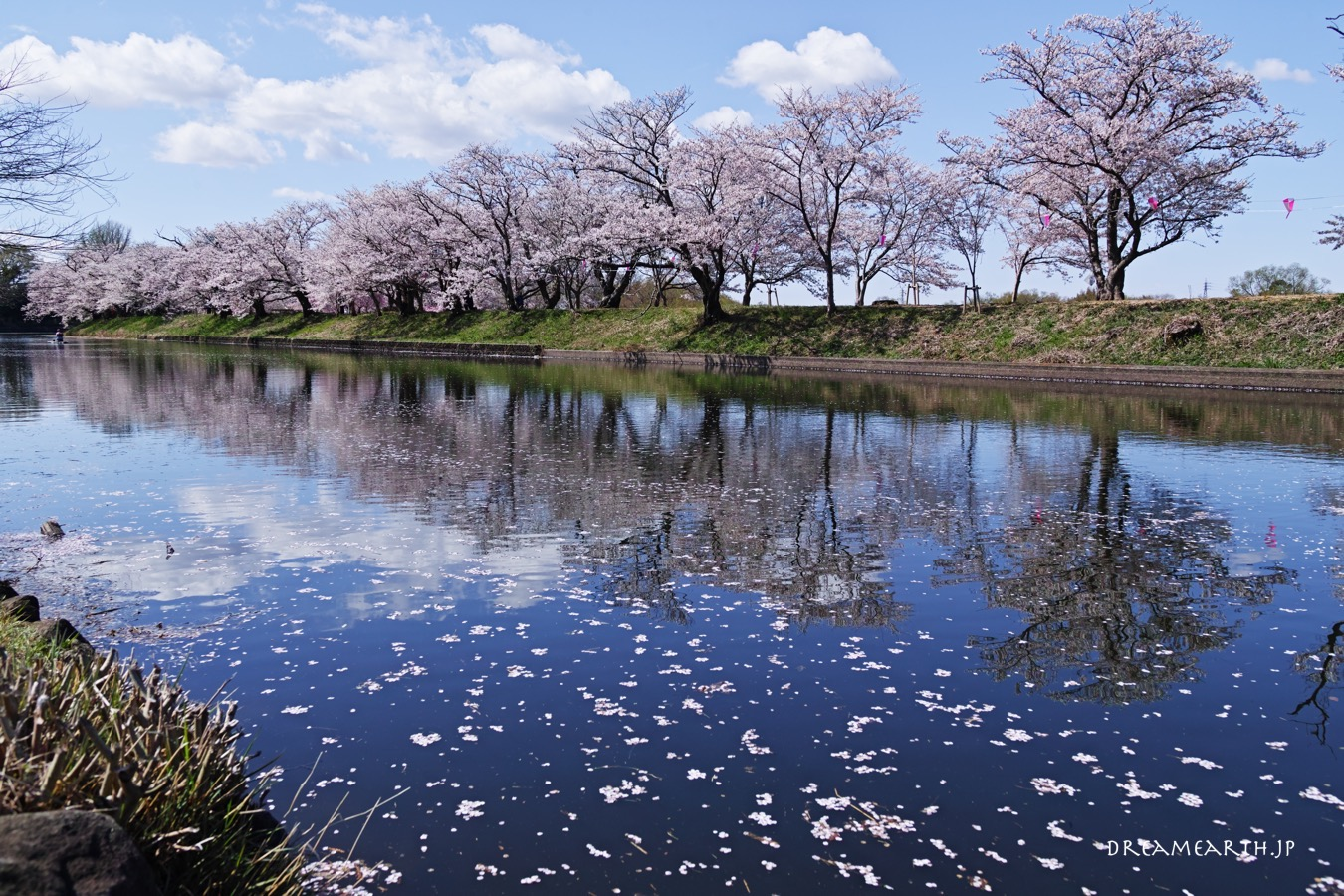 福岡堰さくら公園