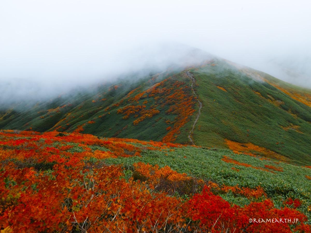 月山の紅葉