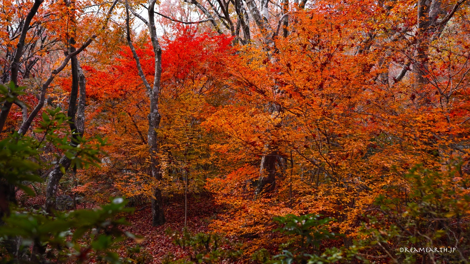 宝筐院の紅葉