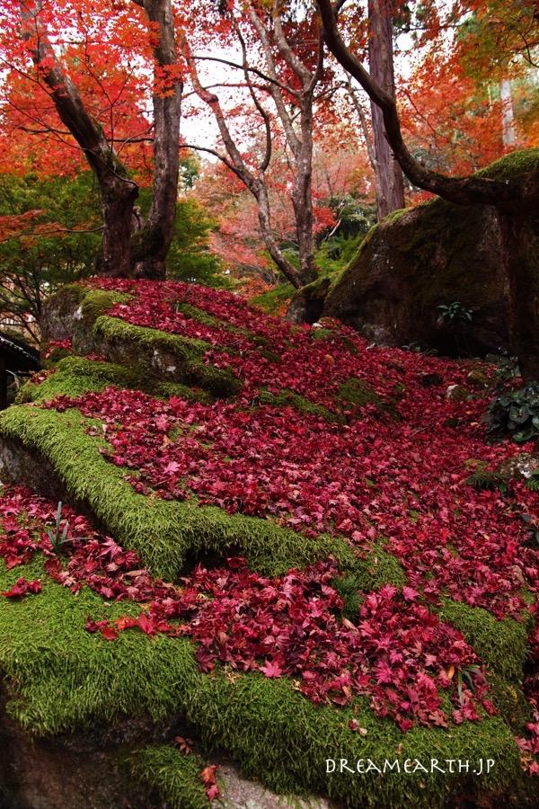 教林坊の紅葉